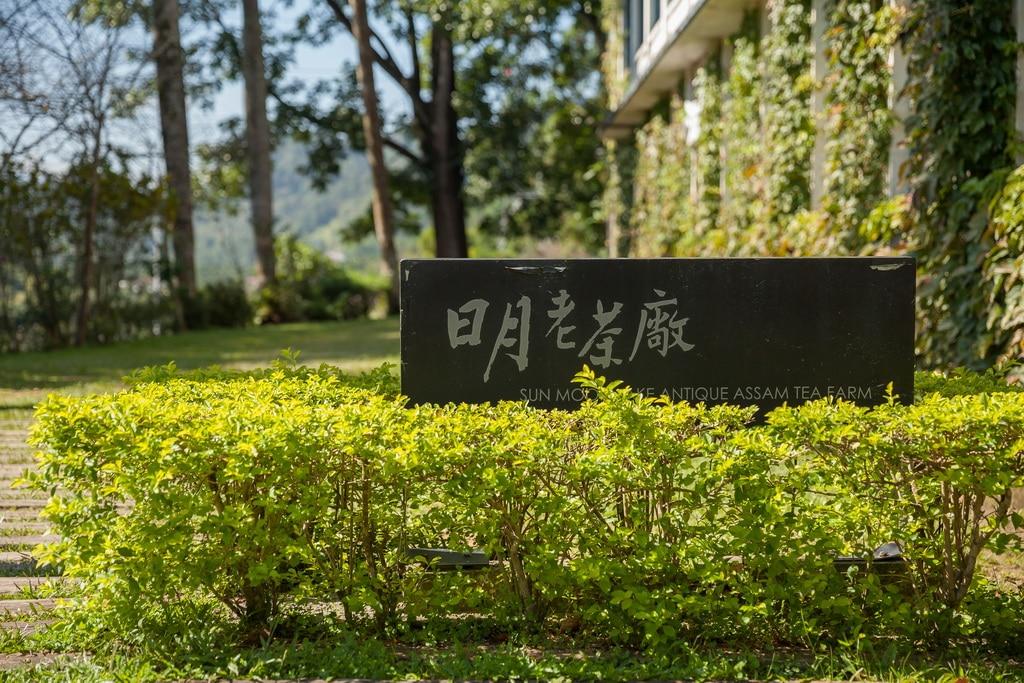 日月潭景點-日月老茶廠