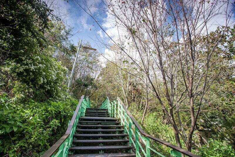 清境景點-清境櫻花步道