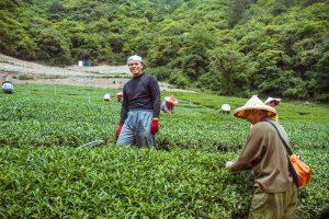 清境景點-紅香部落(紅香茶園)