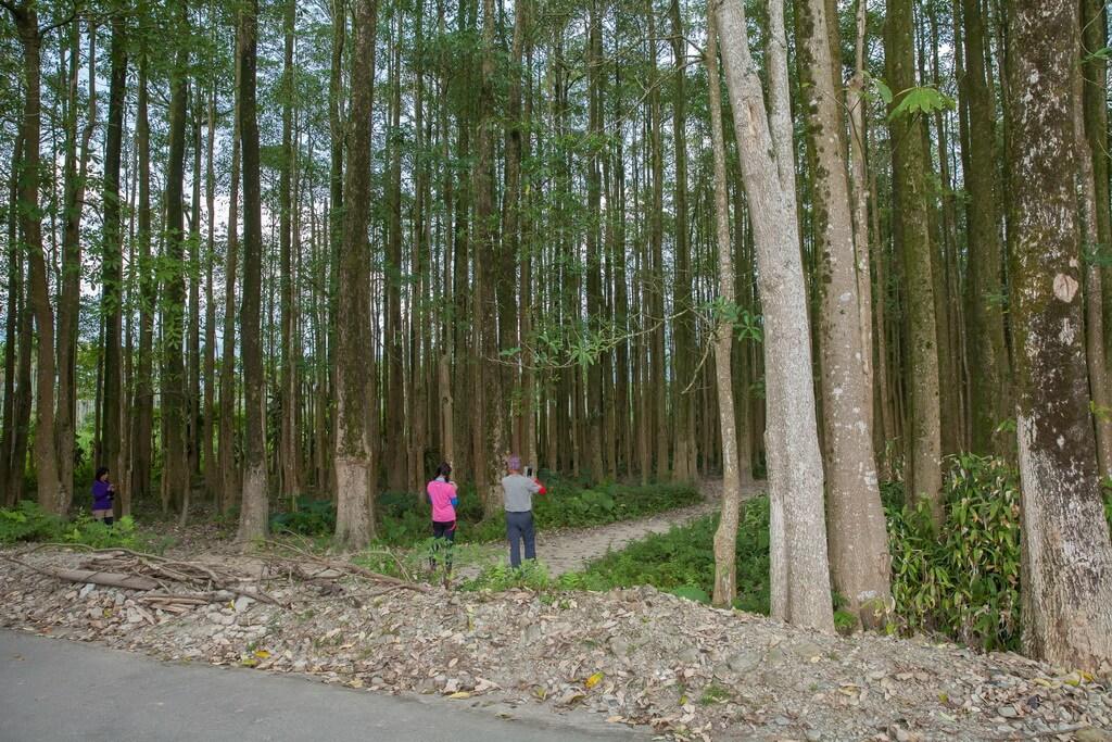 埔里景點-埔里黑森林