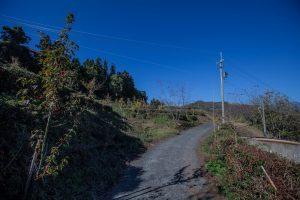 清境景點-清境茶園步道