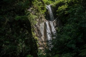 南投清境景點-奧萬大森林遊樂區