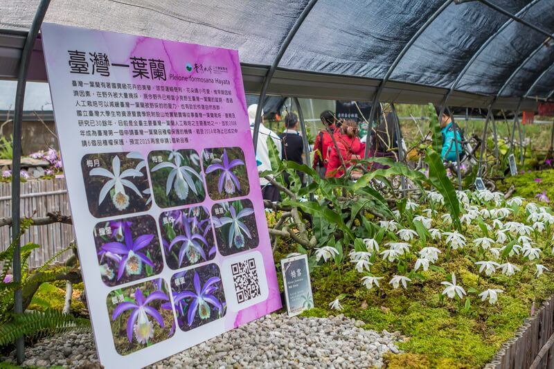南投清境景點-梅峰農場