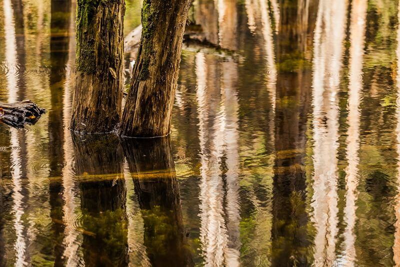 溪頭景點-忘憂森林